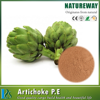 artichoke extract with low price/ Artichoke P.E