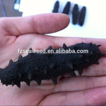 High quality China Dried prickly sea cucumber