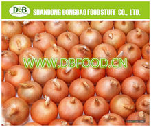 Factory supply New season Fresh Onion 7-9cm yellow onion