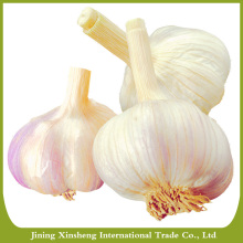 Chinese new fresh garlic red