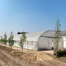 Professional Agricultural Reinforced Commercial Plastic Film Greenhouse