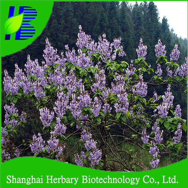 Chinease cold resistant good survive paulownia elongata tree seeds for growing