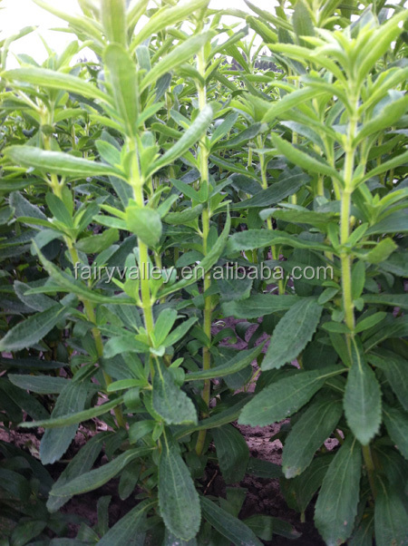 High Germination Rate Crop stevia seeds for growing