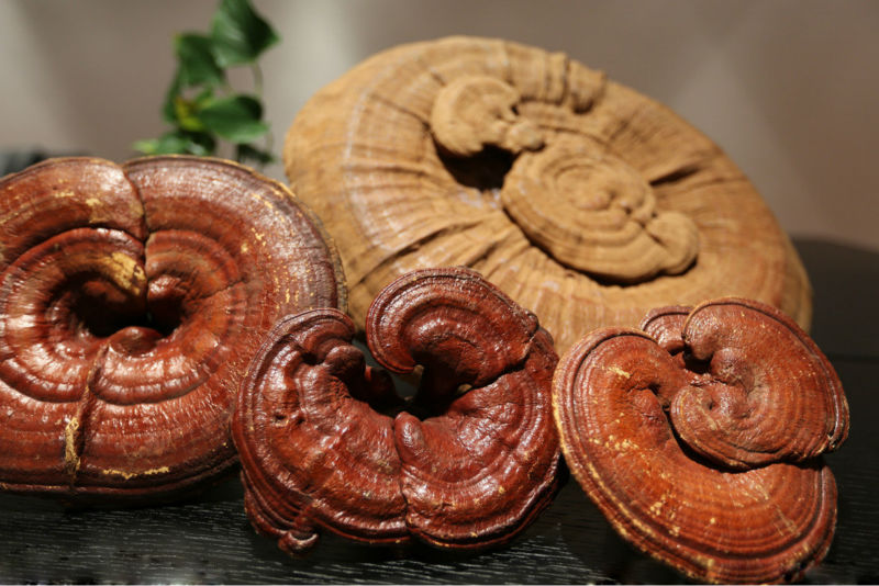 Dry Lucid Ganoderma,Reishi,Ling Zhi Fruit Body Or Its Slices