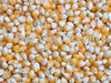 Grade A Dry Yellow and White Corn