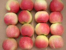 2013 HOT SALE Chinese fresh royal gala apple with Best Quality&Lowest Price!!!