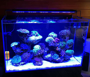 Reef coral tank light intelligent 200w aquarium led lighting for 72 inch aquarium Fish Tank