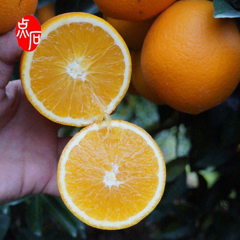 Hot Sale Fresh Citrus Fruit Navel Orange
