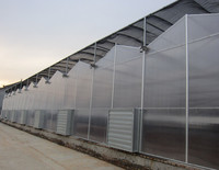 Plastic Multi Span Greenhouse for Tomato Vegetable and flower Greenhouse hot sale greenhouse for farming