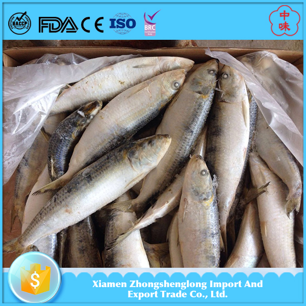 New Stock Frozen Sardine Fish Meal Seafood Mix