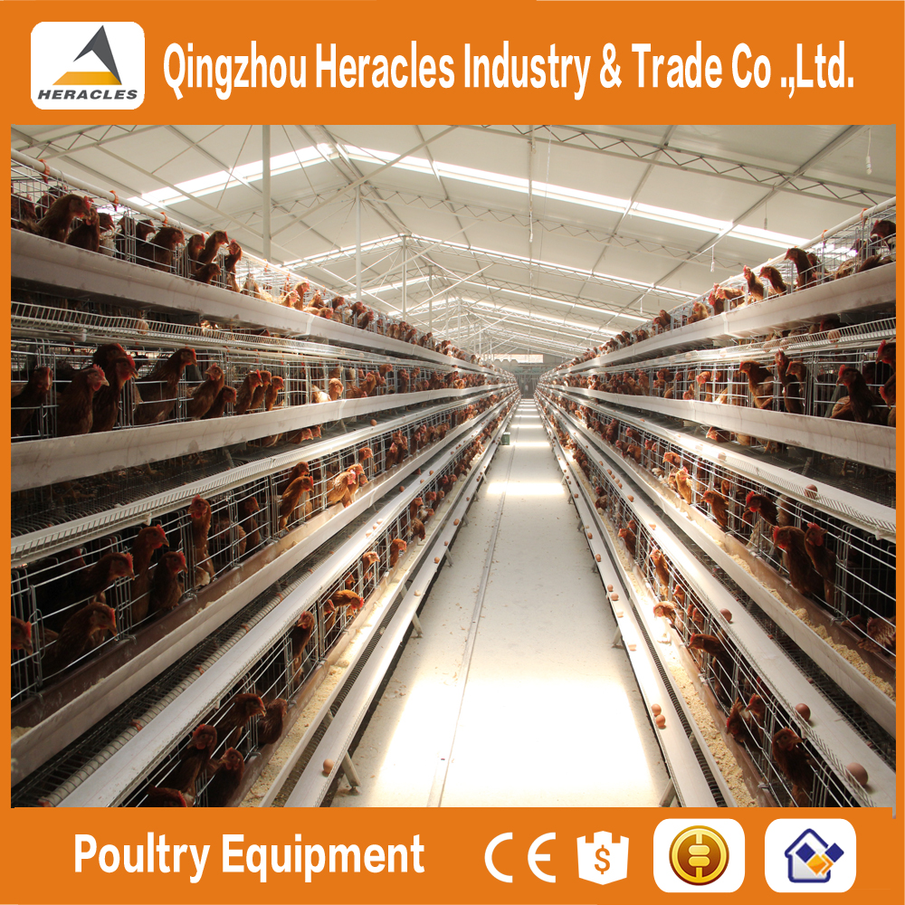 Factory price automatic layer cage for sale