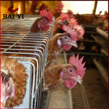 Best Sale Cage For Breeds Of Broiler Chickens With Breeding Equipment For Birds Breeding Farms