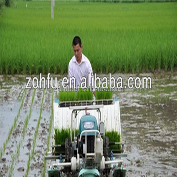 4 rows rice transplanter/rice planter/walking type rice transplanter