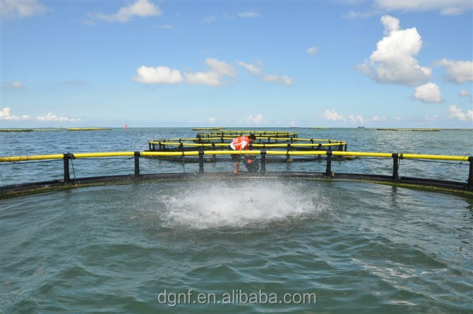 2m*2m/4m*4m/6m*6m PE aquaculture plastic floating fish farms net cage/fishing net in deep sea