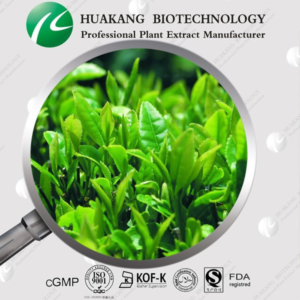 High Quality 100% Natural Green Tea Extract powder,Polyphenols 20%-98% EGCG 10%-98% Catechins 10%-90% HPLC