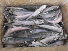 Whole Round BQF frozen mackerel fish