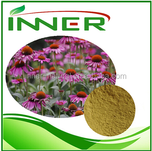 Pure natural plant extract /Echinacea Purpurea extract Polyphenols 4% UV