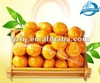 2013 fresh fruit Chinese mandarin orange(hot sell)