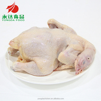 halal quality chicken the whole chicken