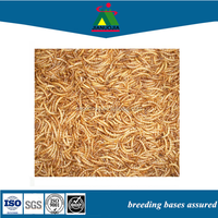 super mealworm freeze dried frozen fish food