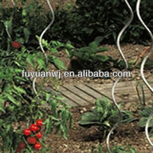 tomato spiral plant support,metal,professional manufacturer and designer