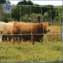 Hot sale galvanized cattle fence / field fence / goat fence
