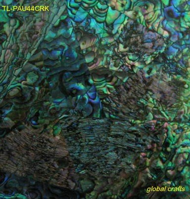 Paua Abalone - Crackled