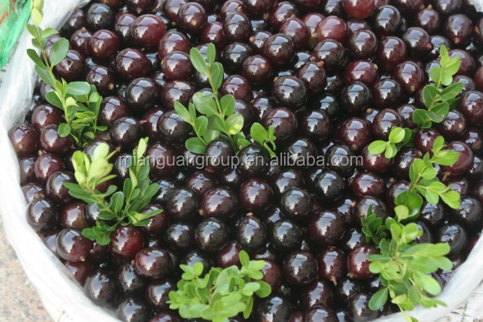 Black Currant seed (Ribes Nigrum) extract powder 25% Anthocyanidin