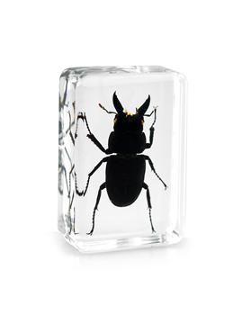 Small Black Stag Beetle Embedded in Resin