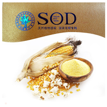 A key player in the antioxidant defense system sod benefits