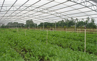 Hdpe vegetable greenhouse woven film Professional Agricultural Plastic film