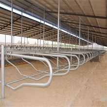 Can Be Customized Factory Direct Sale Cattle Double Cubicles / Cattle Lying Bed / Cow Free Stall
