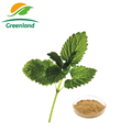 100% Natural Lemon Balm/Melissa Officinalis Extract