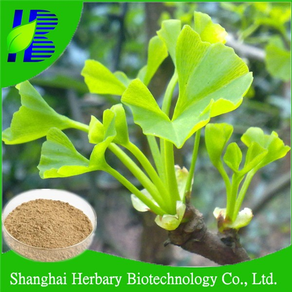 2017 Natural medical herb extract, ginkgo extract flavone glycosides terpene lactones