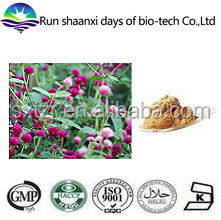 Natural Herb Gomphrena Globosa Extract Powder / Globe Amaranth P.E.