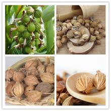 Sha Ren Manufacturer Supply Wholesale Natural High Quality Tsaoko Amomum Fruit