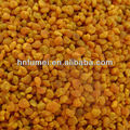 Newest fresh multi flower bee pollen from China