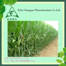 Factory supply Golden Corn stigma P.E extract 80% 98% saponin flavone, alkaloid