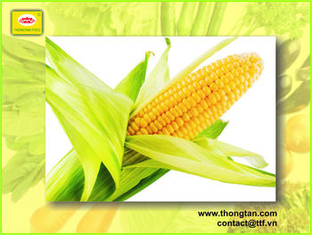 Fresh Canned sweet corn with High Quanlity by thongtan