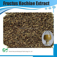 Free sample in bulk top quality fructus kochiae / belvedere fruit extract