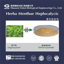Whole herb or leaf 10:1 Peppermint Extract powder