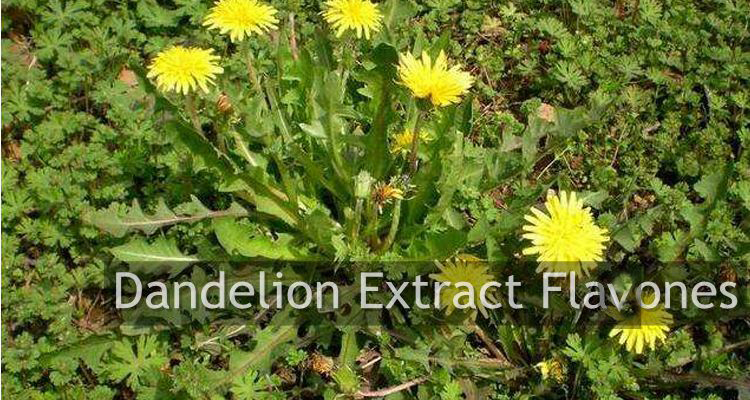 Supply Herbal Supplements Natural Dandelion Root Extract