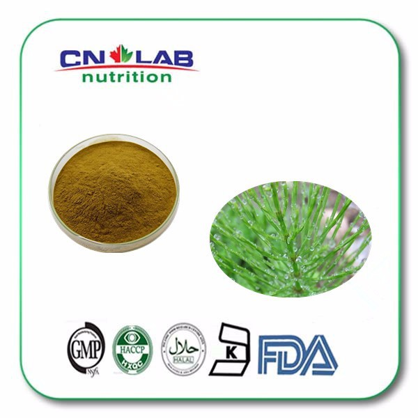 High quality Horsetail P.E./Horsetail Herb Extract/Equisetum Arvense L powder