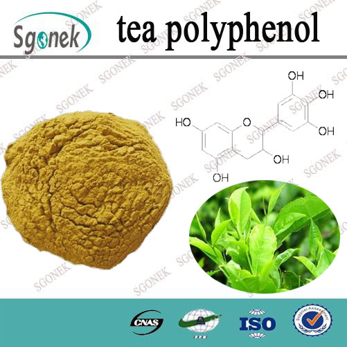 Factory supply Natural herb green tea extract tea polyphenol
