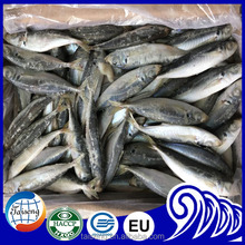 Land Frozen Small Eyes Round Scad Horse Mackerel Importers in Africa
