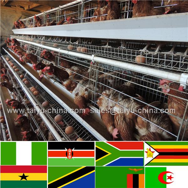 Design 10000 birds poultry farm controlled poultry farms farm