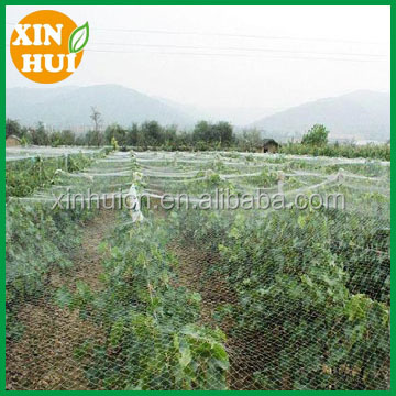 New HDPE and UV Protecting plants vegetables and fruits anti bird netting