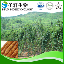 chinese yam rhizome extract powder, 6%~98% Dioscin,active ingredients