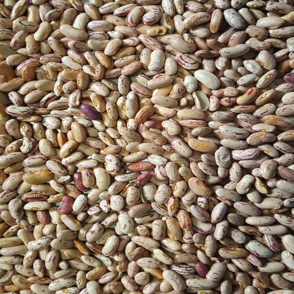 JSX polypropylene bags of 50 kg wholesale grains and beans affordable price best quality pinto bean 25 ton
