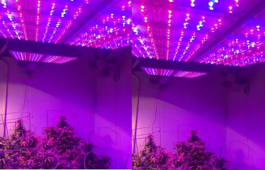 high quality led grow light Aluminum Pc 336*3W grow lighting